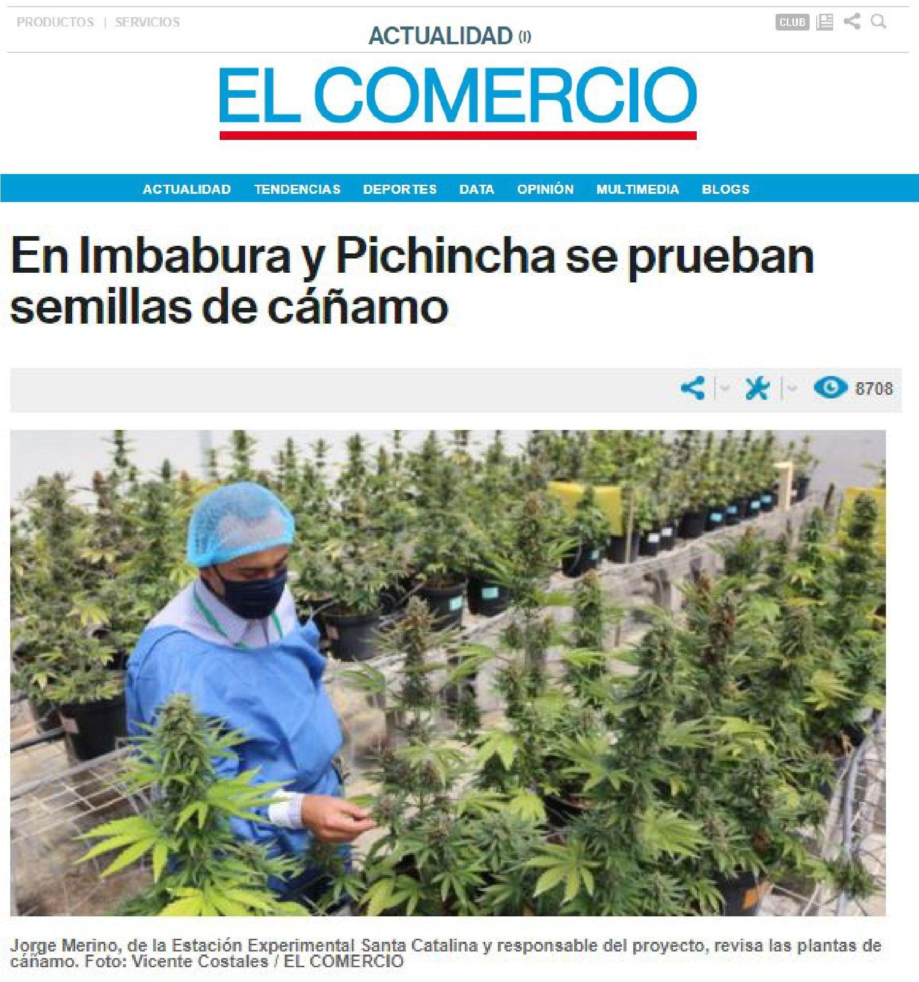 el-comercio-en-imbabura-y-pichincha-se-aprueban-semillas-de-canamo-abogados-ecuador-thc